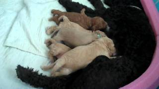 Puppies VERY hungry!