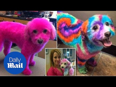 A Woman Is Defending Her Decision To Dye Her Dog's Fur