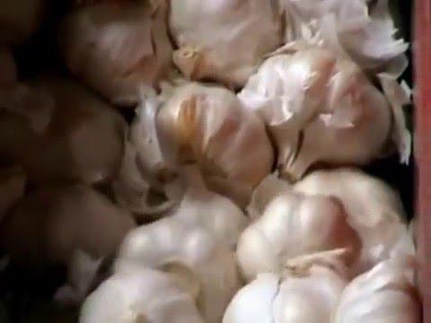 Desgranadora de cabezas de ajos