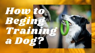 🔥 HOW TO BEGIN TRAINING A DOG?