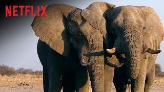 Elfenbein Das weiße Gold Film Trailer