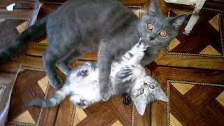 Мама сказала купаться! Кошка воспитывает своего котенка