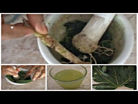 Video Obat Rematik: Manfaat Daun Pepaya sebagai Obat Herbal Rematik