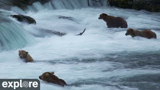 Brown Bears of Katmai Alaska Meditation powered by EXPLORE.org