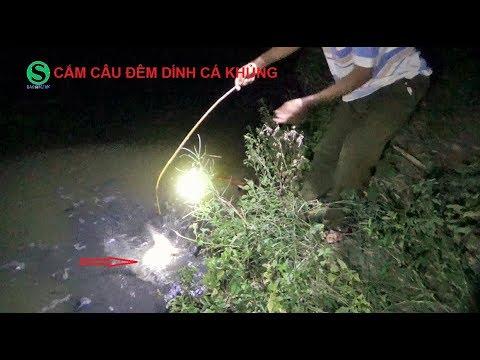 Cắm câu đêm, trúng lớn, dính toàn cá trê khủng | Fishing | Sắc