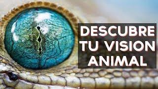 Que visión animal tienes? descubre cual es tu visión animal con este divertido test! ↠↠ ¡No te olvides de suscribirte para no perderte ningún test!