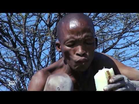 Documental Completo | Recolectores: Vegetarianos y Herbívoros
