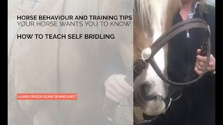 Teach Your Horse To Willingly Put The Bit In Their Own Mouth