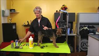 Grooming a Border Terrier: Course Sample