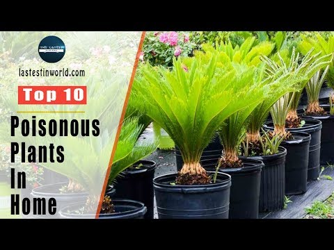Top 10 Poisonous Plants In The Home