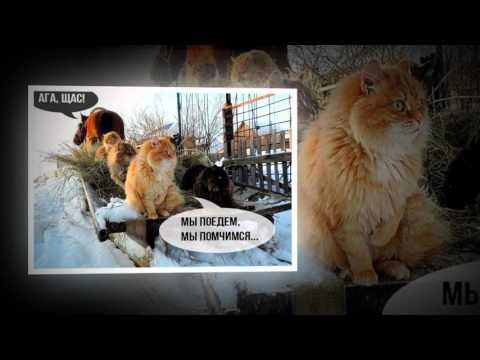 Коты в ожидании весны! Всемирный День Кошек!