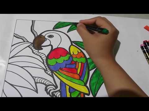 Belajar Gambar Dan Mewarnai Gambar Pelangi Dan Burung Mewarnai