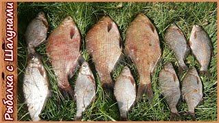 Платная рыбалка на днепре в гомельской области