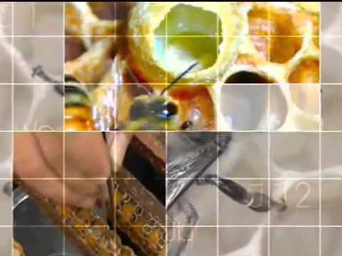 โรคสะเก็ดเงินสามารถรักษาน้ำผึ้ง