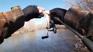 Ловля хищника на реке быстрица рязань