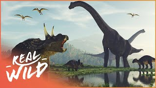 When Dinosaurs Ruled The World | Amazing Animals | Real Wild
