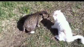 Разборки у котов