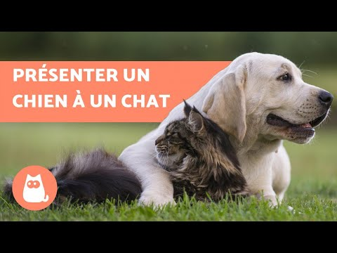 Comment entamer une discussion site de rencontre