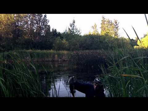 Oregon Pond Bass Fishing.
