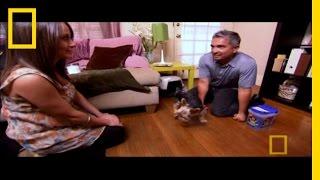 Blind Terrier   Dog Whisperer