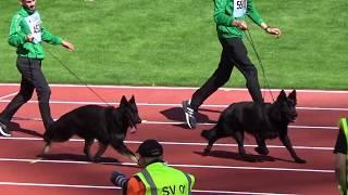 2018 SV BSZS in Nurnberg NKGR part 33 Ekki Gremlin's