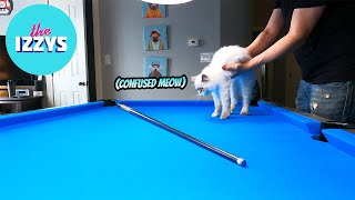 We put our kitten on the pool table and film what she does