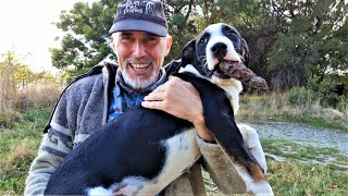Homesteading & Dog Training in New Zealand