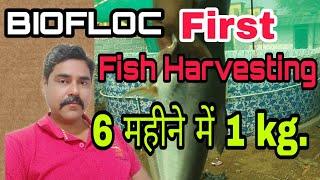 BioFloc fish farming training and live harvest Part-1 - Самые лучшие