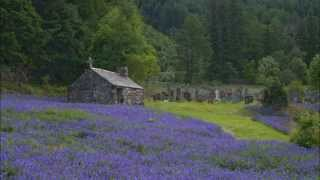 The Bluebells of Scotland....A Traditional Scottish Song with Lyrics