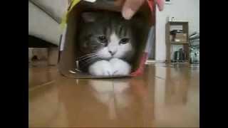 Смотреть онлайн Фантазии в коробке