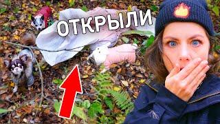 Собаки нашли это в лесу! Что в мешке? Гуляю с собаками, собираем грибы, Юми лазит по деревьям ВЛОГ