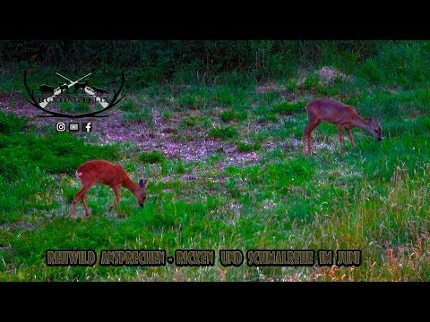 Hunting-Felix: Video: Tipps zum Ansprechen von Schmalrehen und Ricken mit Hunting Felix