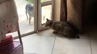 СМЕШНЫЕ КОТЫ И КОШКИ 2017 ПРИКОЛЫ С КОТАМИ И КОШКАМИ