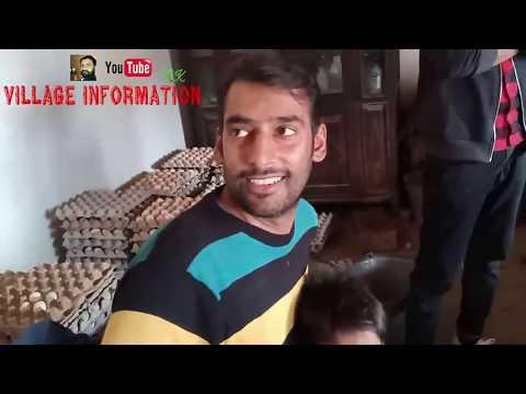 Desi Murgi Poultry Farming/Golden Misri Hen Farming In