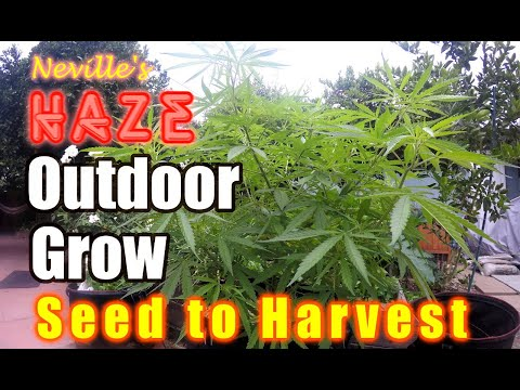 , title : 'Outdoor Organic Seed to Harvest- Easy & Cheap way of growing!
