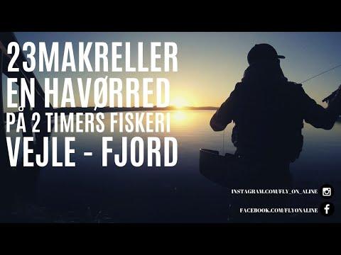 Makrelfiskeri i Vejle Fjord og Vejle Havn