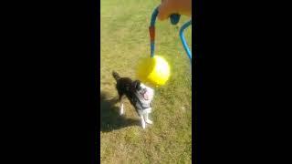 Übung: Impulskontrolle mit dem Ball