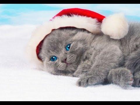 Смешная видео подборка про котят