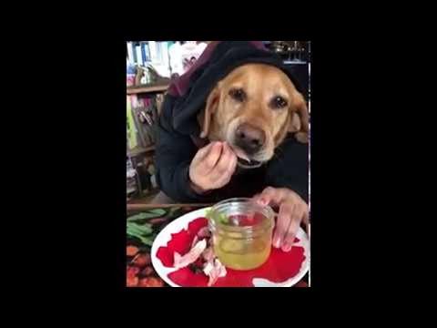 הכלב הזה אוכל ממש כמו בן אדם