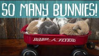 Bunny Update - Cora's HUGE Litter of Baby Bunnies!