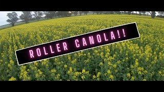 **Canola rollercoaster** Flying my FPV drone over canola (Cinematic Rollercoaster)