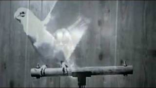 Lady Gaga - Bird Romance In Portuguese
