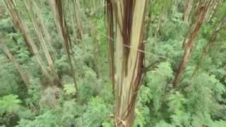 Matt from Parks Victoria takes you on a visual and informational tour of Dandenong Ranges National Park.