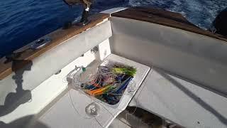 Рыбалке на мадейре