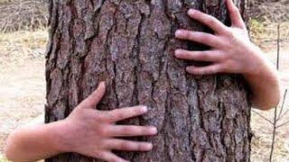 Tree Hugging and Chanting