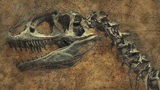 5 Неразгаданных тайн про динозавров