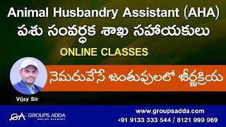 నెమరు వేసే జంతువులలో జీర్ణక్రియ ll Animal Husbandry Assistant ll Online Classes ll Groupsadda ll