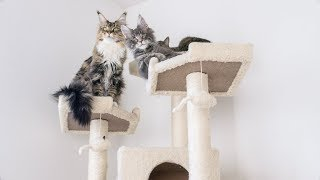 Why We Are Getting Rid Of Our 72 Cat Tree...