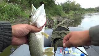 Кого ловить в августе на реке