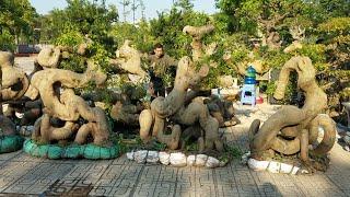 SH.2109.Đồng Báo Giá 15tr Một Phôi Sanh Quái Dáng Tại Bắc Ninh Hôm Nay.